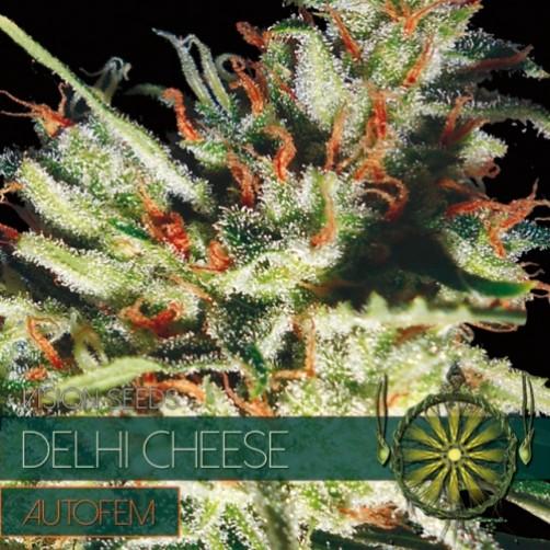 SEMI DELHI CHEESE 3pz