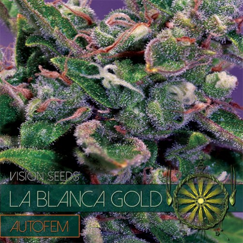 SEMI LA BLANCA GOLD 3pz