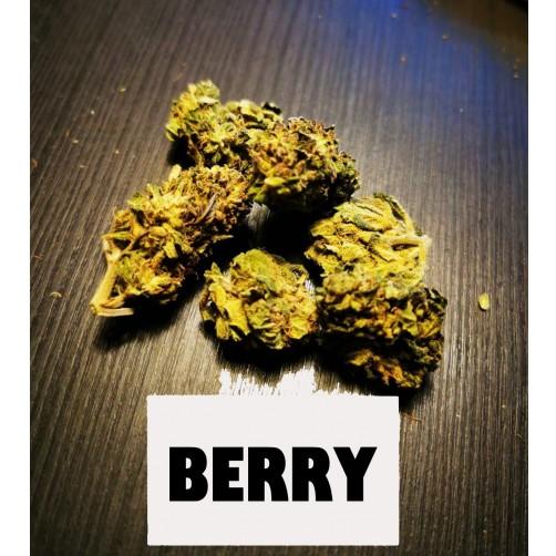 BERRY 1 KG CBD >7%  THC 0.2%