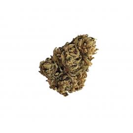 KIWI 0.2% THC