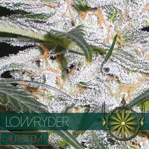 LOWRYDER AUTOFEM 10 SEMI