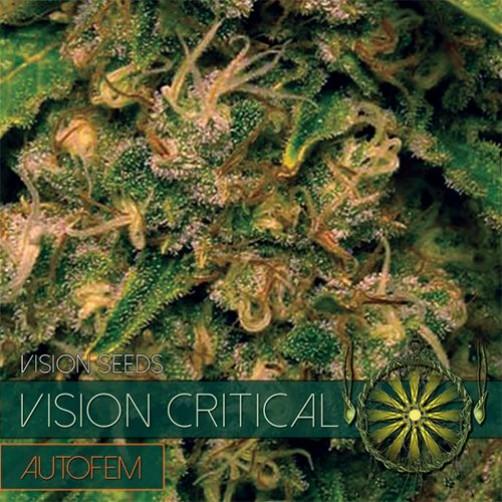 Vision Critical AutoFem 10 SEMI